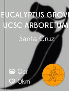 Eucalyptus Grove, UCSC Arboretum